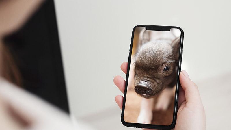 スマートフォンの中のマイクロブタ