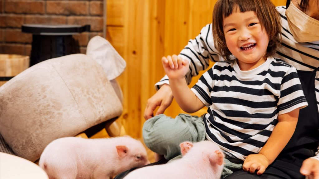 pignic farm&cafeご利用イメージ